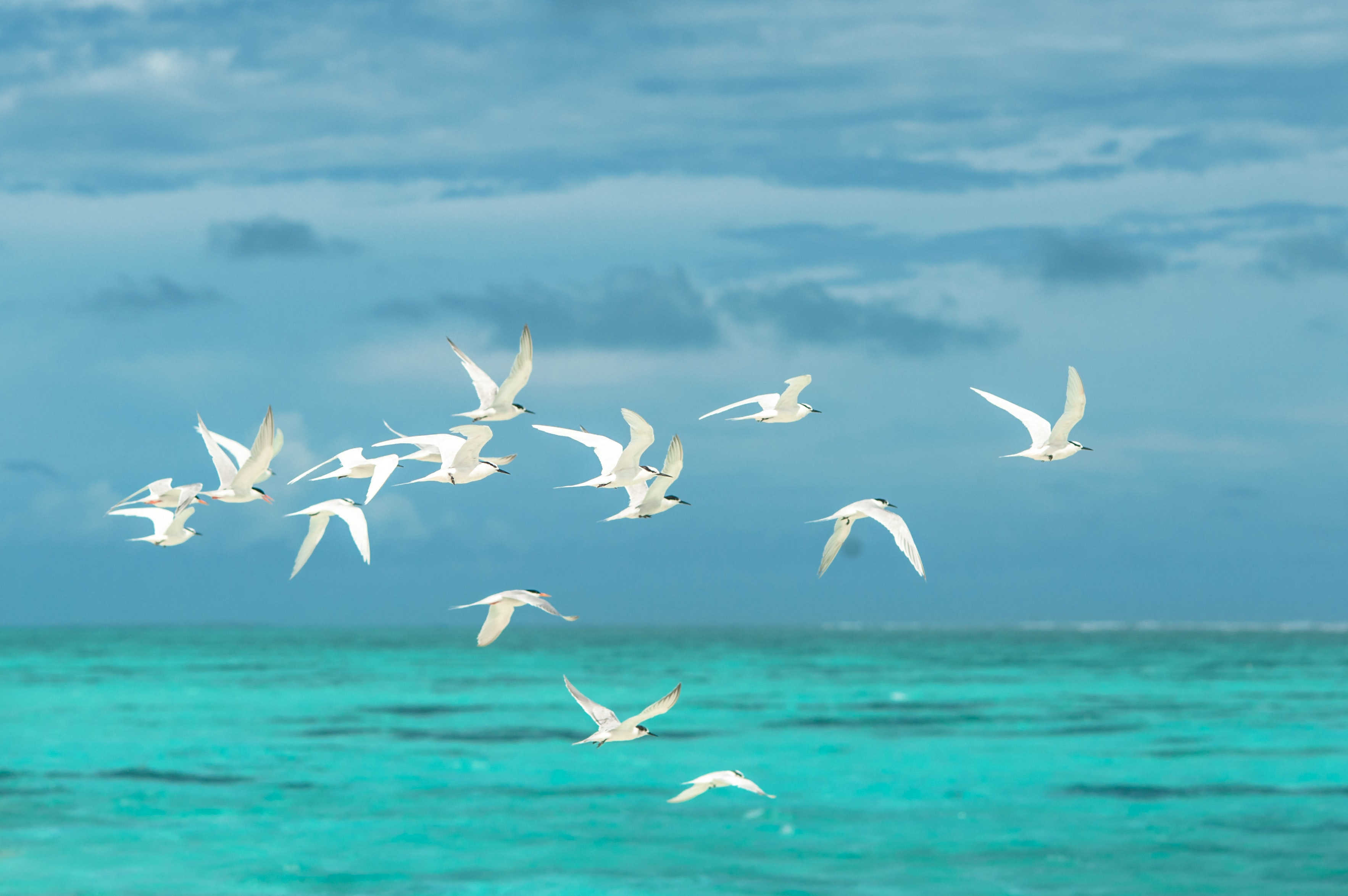 daytime-flock-of-birds-flying-1268874
